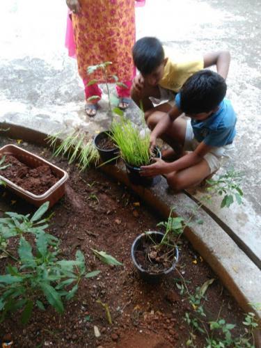 Grocos Plantation rice -1